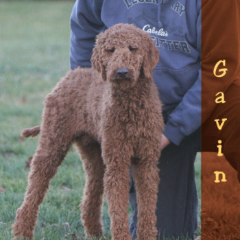 Sunshine Acres Gavin