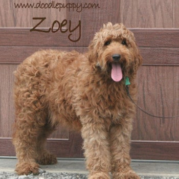 Sunshine Acres Zoey