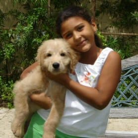 Goldendoodle in DR